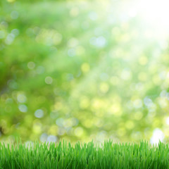 natural green bokeh as background