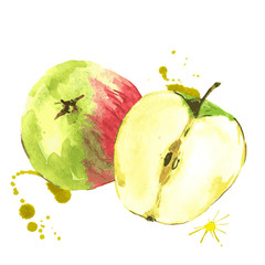 Watercolor apples, summer hand drawn fruit