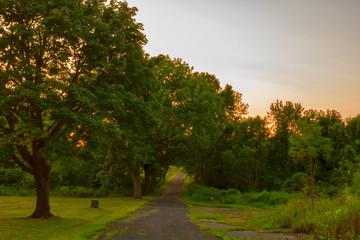 Foresty landscape at sunset.