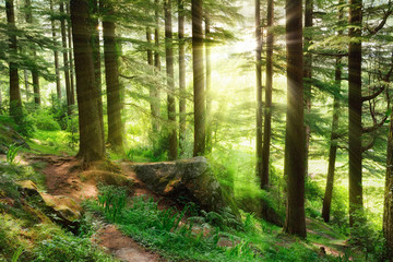 Wall Mural - Sunrays falling into a vibrant green forest