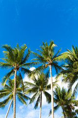 Tropical palm trees in the blue sunny sky