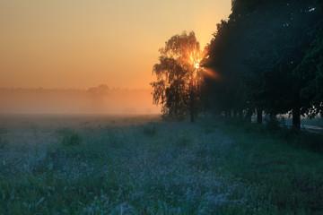 Fototapeta Wschód słońca, pola, drzewa obraz