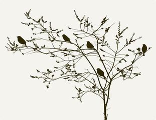 birds on the spring tree