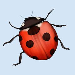 Illustration eines Marienkäfers