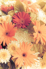 The beauty of Gerbera Vintage in the summer.