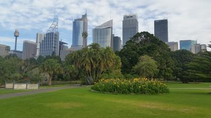 Fototapete - Sydney City from the Botanic Garden