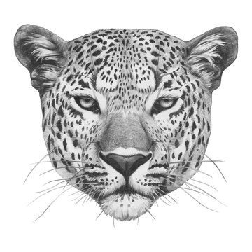 Original drawing of Leopard. Isolated on white background.