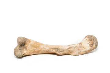 Bone on white background