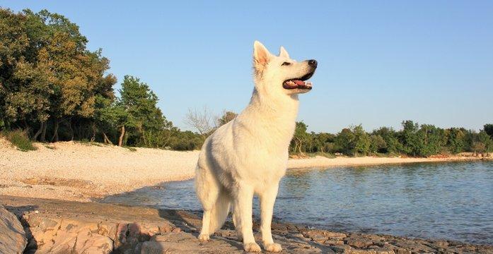 Hund bei Sonnenuntergang