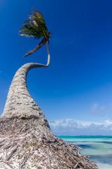 natürlicher Strand mit einer Palme in der dominikanischen Republik