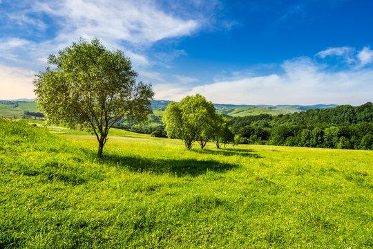 few trees on hillside meadow at sunrise