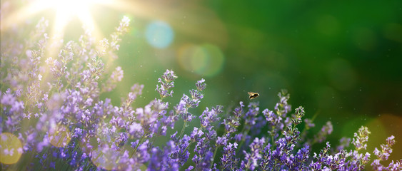 Spoed Fotobehang Olijf art Summer or spring beautiful garden with lavender flowers