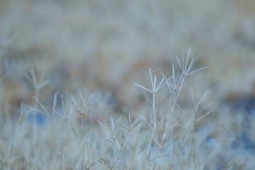 Texture on Die grass