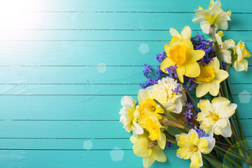 Background with bright colorful yellow and blue spring flowers in ray of light on green  painted wooden planks. Selective focus. Place for text.