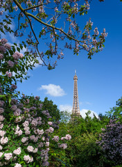 Eiffel Tower and colorful blossoming trees, Paris
