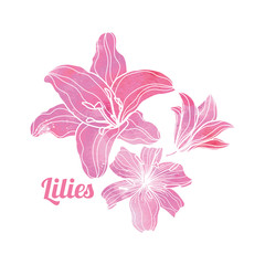 Painted Pink Watercolor Lilies