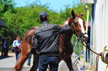 douche du cheval