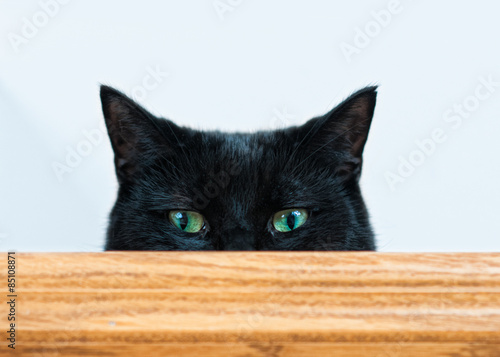 mischievous black cat