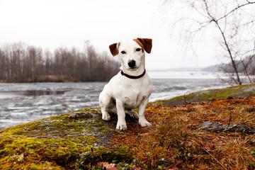 Dog watching meditative