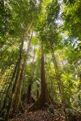 Majestic Borneo rainforest from below