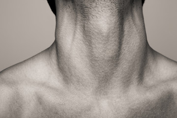 the Adam's apple