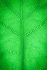 Green leaf close-up background