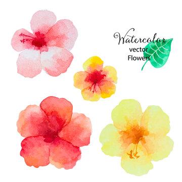 Set of watercolor hibiscus flowers.