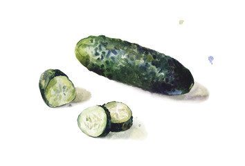 Isolated vector cucumber in watercolors on white background. Artistic hand painted vegetable. Whole and sliced.