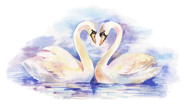 vector watercolor illustration of couple of white swans