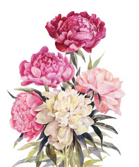 Bouquet of peonies watercolor. Vector Iillustration for vintage greeting