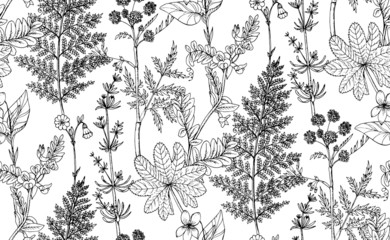 Seamless vector pattern of herbs and flowers