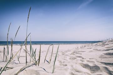 Grass sand dune beach sea view, Baltic Sea