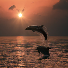Bright orange sunset at the ocean and two beautiful dolphins leaping out of water