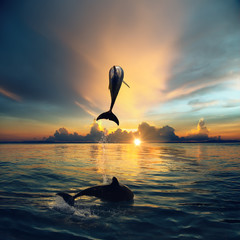 A wild dolphin jumped from shinig vibrant ocean water with beautiful sunset at seascape