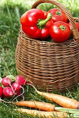 fresh organic vegetables in a wicker basket
