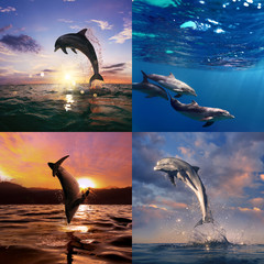 Four images in one collection sheet. Beautiful dolphins in natural habitat jumping from sea and floating underwater