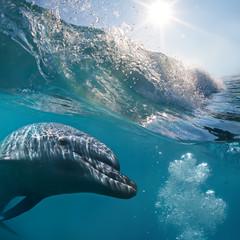 A dolphin closeup portrait under surfing splashing wave in sunrays underwater