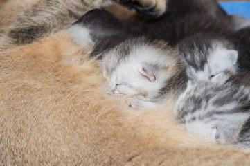 Cat mom with newborn kitten
