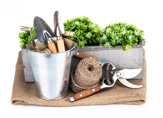 Garden tools in bucket with green plant. Isolated on white