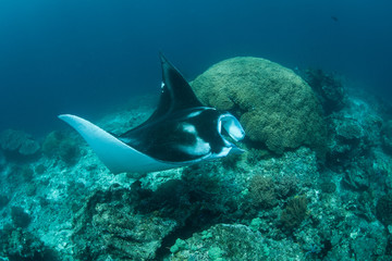 Manta Ray on Cleaning Station