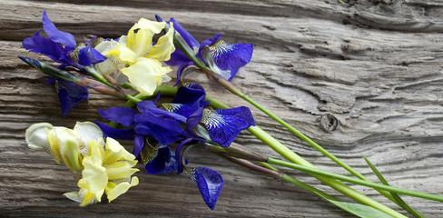 Schwertlilien / Iris auf altem Treibholz Brett