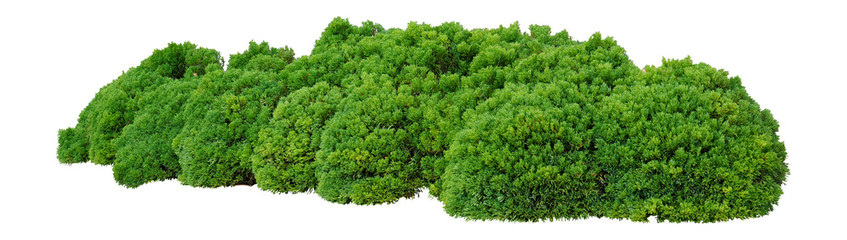 Shrubs Wall mural