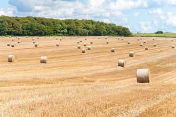 Strohballen auf abgemähtem Feld, Getreidestroh, Landwirtschaft, Sommerlandschaft Fotoväggar