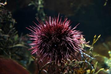 Photo taken during sightseeing at Sea Life London Aquarium in London, England.