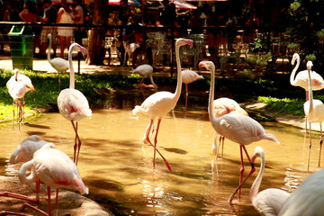 Photo taken during sightseeing around the Bird Park in Foz do Iguacu, Brazil.
