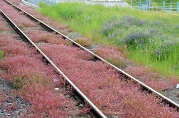 Nature gets back industrial terrain, Vorpommern, Germany