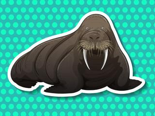 Walrus