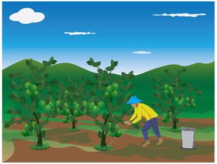 agriculturist manure lime plant vector design
