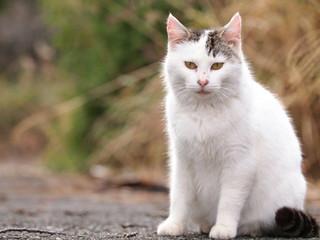 街角の野良猫