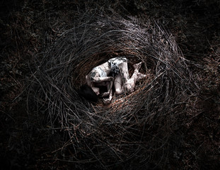 girl in the nest, corpse of the girl in the woods